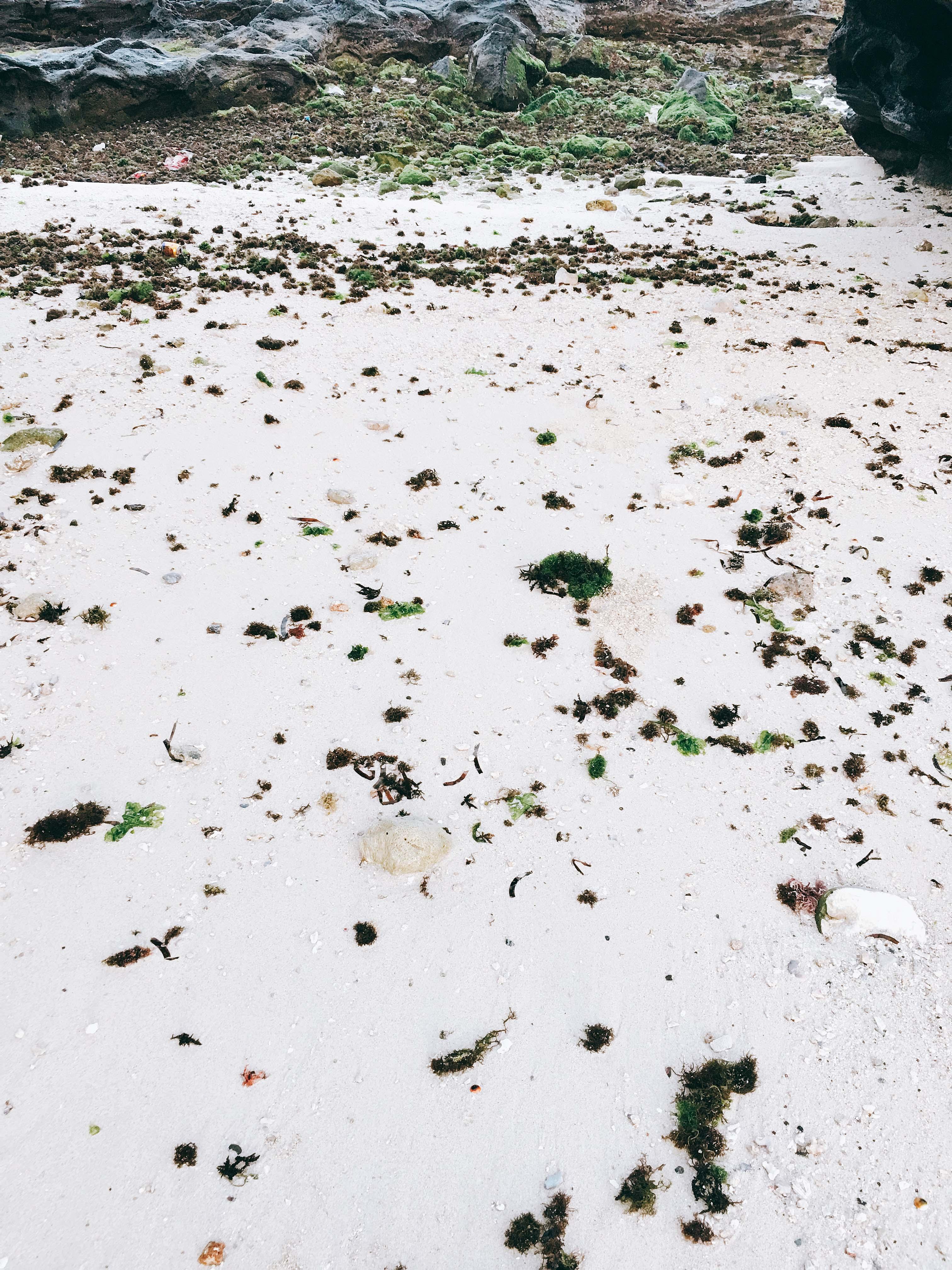 Cát trắng mịn xen lẫn tảo xanh đang vào mùa