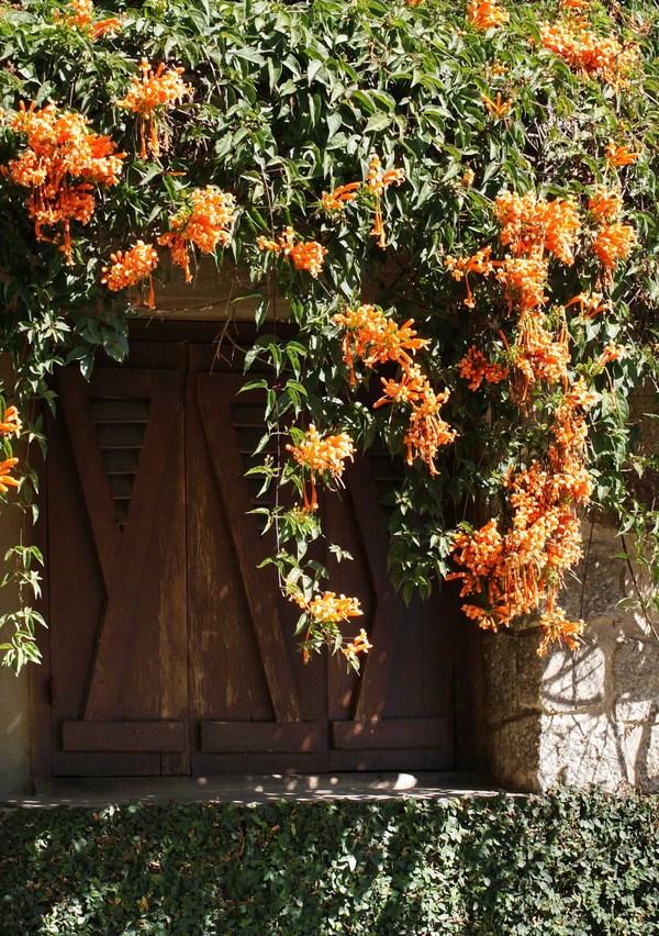 Theo thời gian, những dàn dây leo đơm hoa theo ô cửa sổ đậm nét kiến trúc Tây Ban Nha khiến không gian nơi đây trở nên lãng mạn