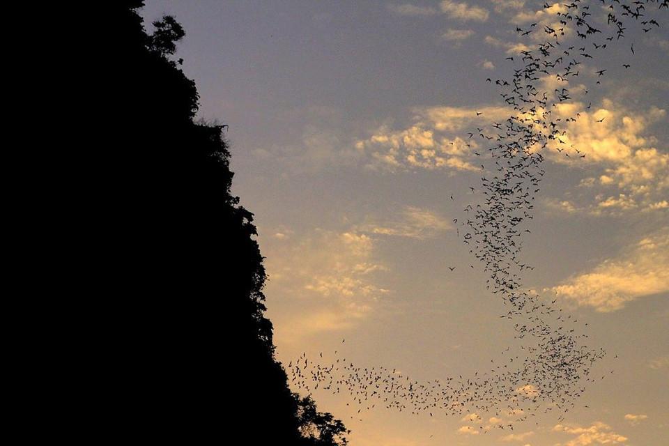 """Thăm động dơi Battambang lúc hoàng hôn: Cứ vào lúc xế chiều tại chân núi Phnom Sampeau, những người hiếu kỳ lại tụ về đây để quan sát một cảnh tượng kỳ vĩ. Hàng nghìn con dơi như """"vỡ tung ra"""" từ một hang động để bắt đầu những cuộc săn đêm của chúng. Ảnh: Maptrotting.com."""