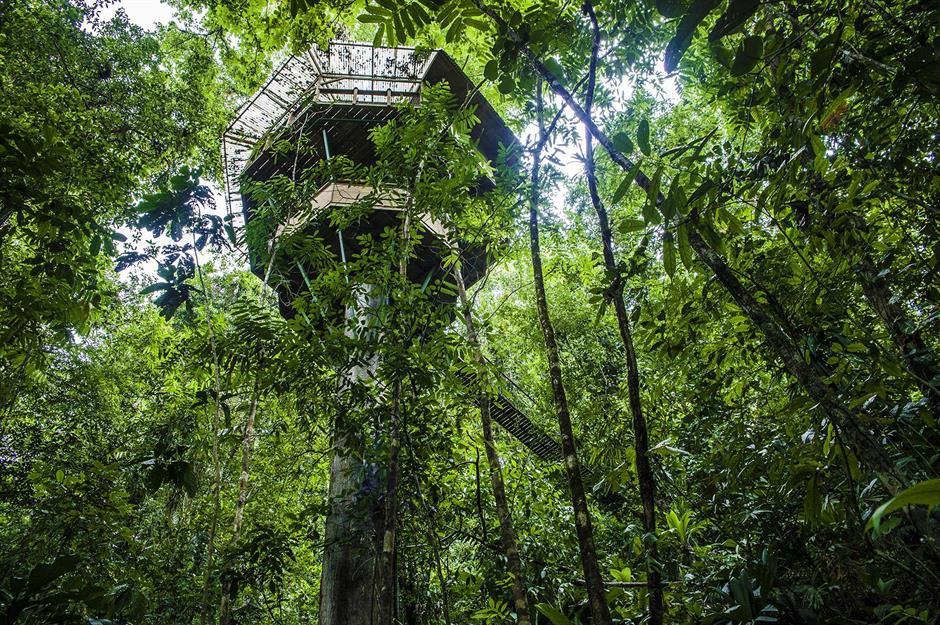 Finca Bellavista, Costa Rica: Ở khu bảo tồn thiên nhiên Costa Rica, du khách có cơ hội nghỉ ngơi tại ngôi nhà trên cây nằm ở độ cao hơn 27 m, cung cấp chỗ ở tối đa cho 6 người. Bên cạnh đó, xung quanh ngôi nhà còn có các cây cầu treo, giúp du khách khám phá cảnh quan của khu rừng cũng như cuộc sống của các loài động vật hoang dã xung quanh. Ảnh: Finca Bellavista.