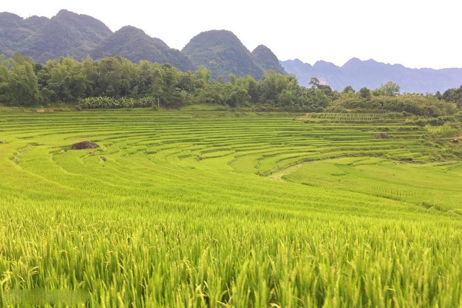 Đến Pù Luông là đến với những bản làng được bao quanh bởi ruộng bậc thang, những cánh rừng xanh rì xen lẫn dãy núi trập trùng, cùng con suối và dòng thác mát rượi.