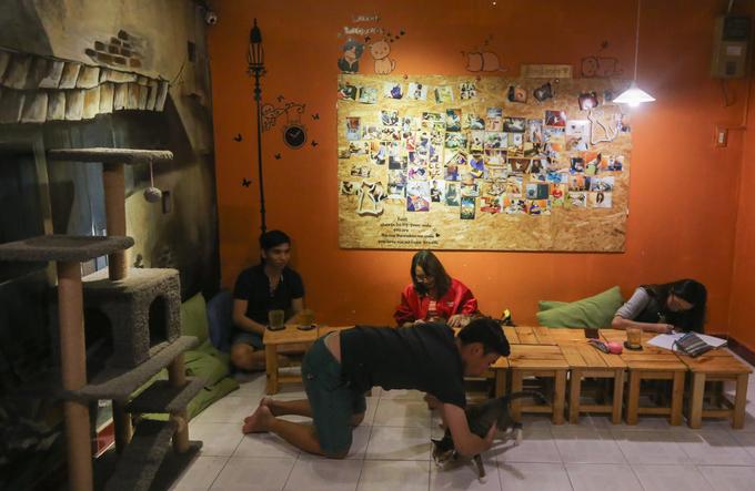 Hơn hai năm nay, quán cà phê trên đường Nguyễn Kiệm (quận Phú Nhuận, TP HCM) là mái nhà của những con mèo không chủ. Trong quán luôn có khoảng 20 con mèo.