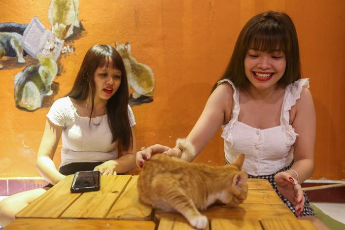 Theo chủ quán, thời gian đầu, mèo thường tỏ ra hung dữ, sợ sệt nhưng qua thời gian ngắn nuôi dưỡng chúng sẽ ngoan ngoãn, quấn quýt với khách.