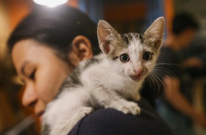 """""""Em rất thích mèo, mấy năm trước em có nuôi mèo nhưng nó bị chết nên sợ không dám nuôi. Nhưng giờ ba em ở nhà một mình nên em kiếm một con về nuôi cho đỡ buồn. Sau khi đến quán, chơi đùa với mèo, em chọn con mình thích nhất về nuôi"""", bạn Quỳnh Huyên (22 tuổi, quận Tân Bình) cho biết."""
