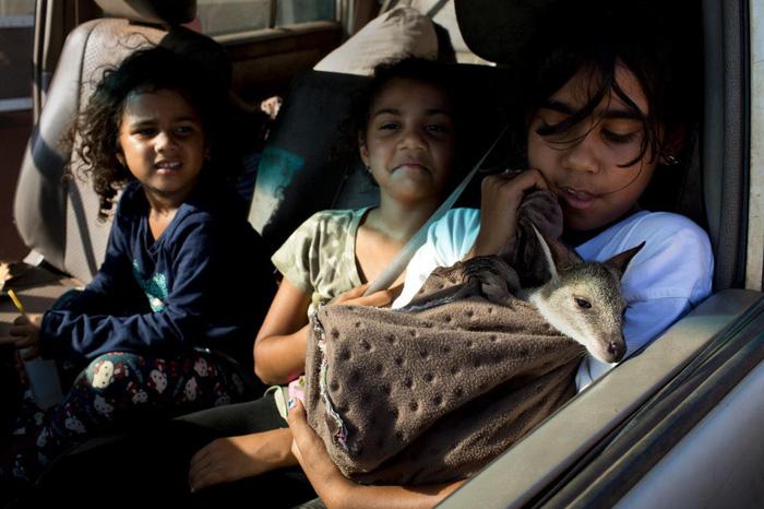 Các bé gái Tiwi đang ôm ấp chuột túi wallaby - Ảnh: DAVID MAURICE SMITH, OCULI/NG