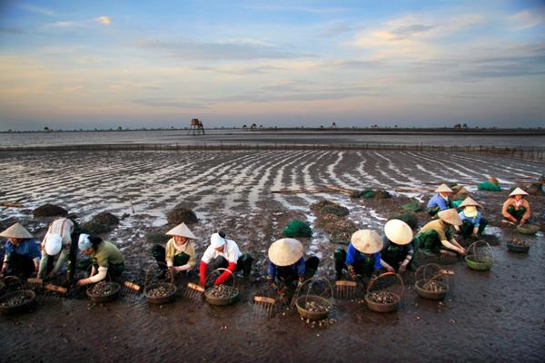 Đồng Châu không chỉ là vùng biển đẹp thuận lợi khai thác du lịch mà còn là nơi lý tưởng để canh tác  và nuôi trồng ngao. Khung cảnh những người phụ nữ cào ngao trải dài trên cánh đồng  đã trở thành nguồn cảm hứng cho nhiều nhiếp ảnh gia.