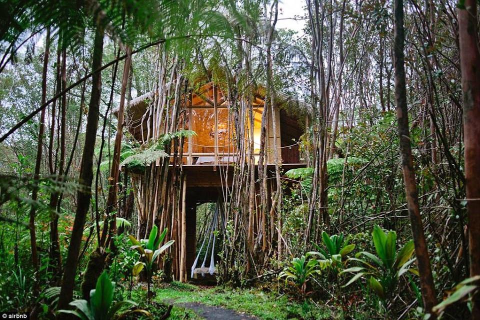 6. Tropical Treehouse, Fern Forest, Hawaii - được yêu thích 66.336 lần: Căn nhà cây xanh nhiệt đới nằm trong tán rừng rậm ở bên ngoài Công viên quốc gia Hawaii Volcanoes thuộc đảo chính.