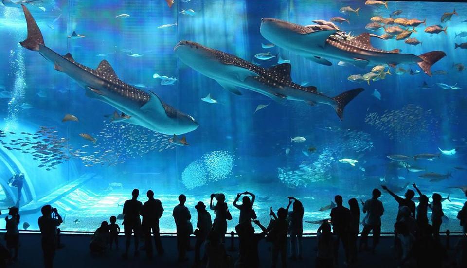 Khám phá đại dương tại công viên thủy cung Kaiyukan: Thuộc top các công viên thủy cung hàng đầu thế giới, Kaiyukan có hơn 30.000 động vật được phân bố ở 15 khu trưng bày thiết kế khác nhau. Tham quan một vòng thủy cung, du khách có dịp chiêm ngưỡng môi trường sống đa dạng của các loài sinh vật trên khắp vành đai Thái Bình Dương. Ảnh: Destination Traveled.
