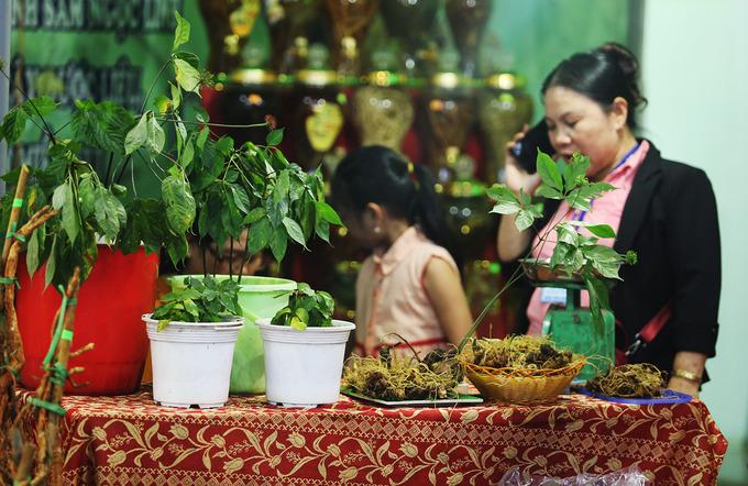 Sâm được người dân trưng bày tại các gian hàng để khách chọn lựa.