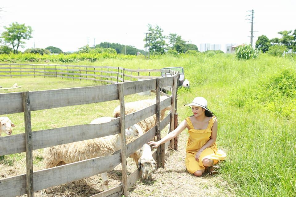 Chỉ mất khoảng 50.000 đồng/người bạn có thể thoải mái chụp hình với khung cảnh đẹp như đang ở Ninh Thuận cùng những chú cừu dễ thương.