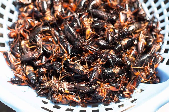 """Ông Lê Ngọc Cương, chủ một trại dế ở thị trấn Đạ Tẻh, cho biết: """"Dế xào sả ớt dễ chế biến, ăn không ngán. Tự tôi nhập trứng dế về rồi cho ấp theo đúng quy trình nuôi"""". Ông Cương cũng chia sẻ, dế là loài côn trùng sạch, giàu dinh dưỡng, chứa nhiều protein (đạm), tốt cho sức khỏe."""