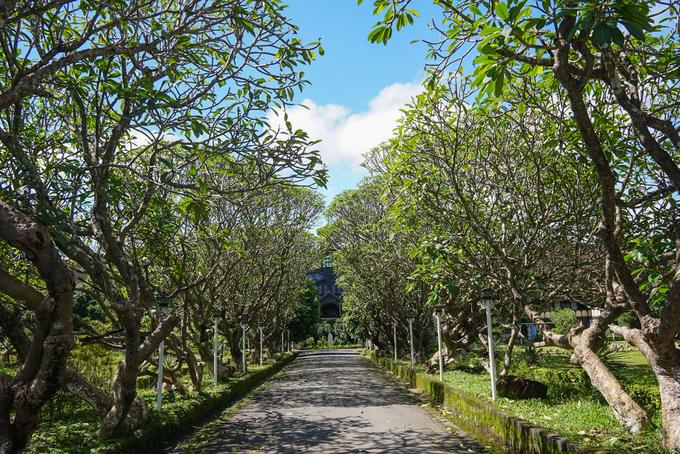 Bao quanh Tòa giám mục là khuôn viên rộng với nhiều cây lâu năm. Nổi bật là hai hàng cây sứ rợp bóng mát ở lối vào, mang đến vẻ bình yên, tĩnh lặng. Tòa Giám mục Kon Tum đóng cửa vào thứ 3, các ngày còn lại trong tuần đều mở cửa đón khách tham quan.