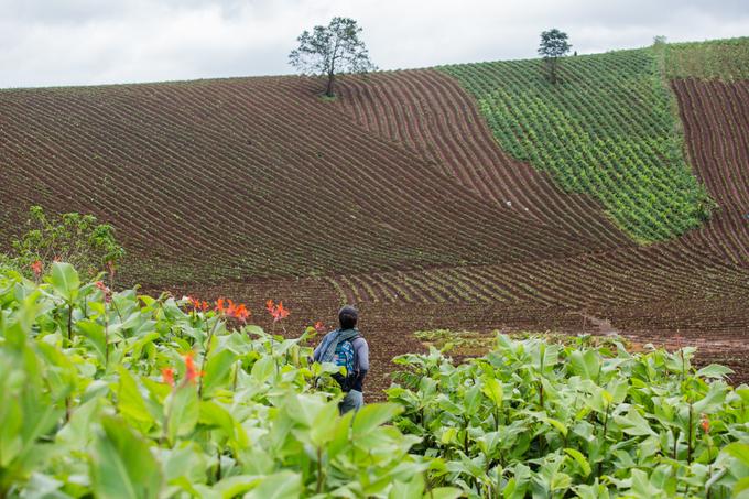 Nhìn từ xa, núi lửa Chư Đăng Ya tựa như một chiếc bát úp. Nhưng leo lên đỉnh, bạn sẽ thấy miệng núi giống như một lòng chảo rộng lớn với những luống ruộng đều tăm tắp, trồng ngô, khoai, bí đỏ, dong riềng xen kẽ.