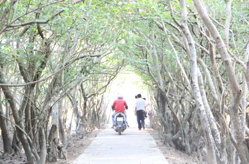 Rú Chá bạt ngàn màu xanh của những vòm cây