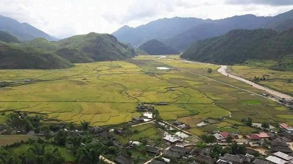 Vì hợp với đặc điểm khí hậu, đất nên nếp tan nơi đây nên giống nếp tan cổ này có vị ngon đặc trưng, hơn hẳn các giống lúa nếp thường.