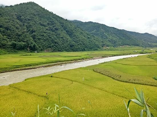 Từ trên cao nhìn xuống cánh đồng lúa chín vàng rực rỡ, đẹp như tranh vẽ.