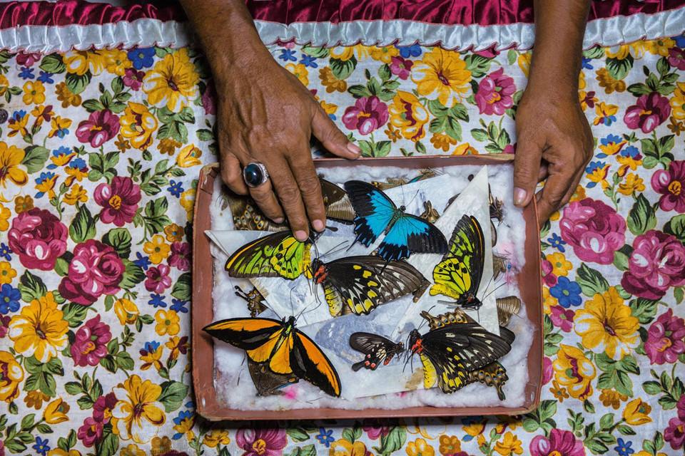"""Số lượng bướm thu về được các thợ săn rao bán ngay tại chợ Bantimurung, hoặc chuyển đến những """"chủ bướm"""" người Indonesia để phân phối cho các đại lý trên khắp thế giới. Không thể định giá chính xác cho thị trường """"chợ đen"""" này trên toàn cầu, song con số ước tính có thể lên đến hàng trăm triệu USD mỗi năm."""