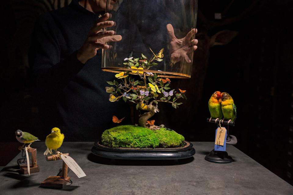Tuy nhiên một thực tế phũ phàng là chỉ những chú bướm tinh tế bên dưới lớp kính trưng bày trao đến tay các nhà sưu tập mới có giá trị hàng nghìn USD, thậm chí là một mức giá... trên trời. Trong khi đó, những người săn bướm tại đảo Sulawesi chỉ được trả vài xu ít ỏi cho mỗi con.
