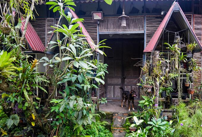 """""""Quán mở cách đây 25 năm trong khu vườn rộng 1.000 m2 của gia đình. Sau đó, chúng tôi trồng thêm nhiều loại cây hoa để tạo ra không gian như vùng núi rừng Tây Nguyên. Ban đầu, quán chỉ là cà phê vườn rồi dần dần được trang trí như hiện tại"""", bà Cẩm (chủ quán) cho biết."""