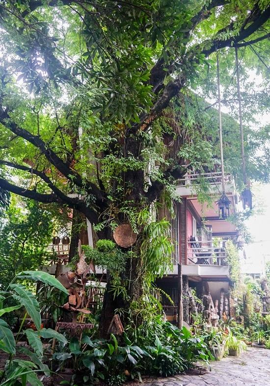 Nổi bật trong quán là hai cây me gần trăm tuổi với dây leo chằng chịt, tạo nên vẻ hoang sơ.