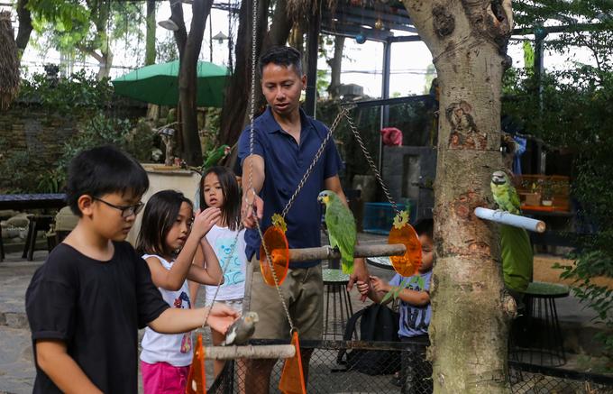 Một quán cà phê trên đường Nguyễn Văn Hưởng (quận 2, TP HCM) được thiết kế kiểu sân vườn, chủ quán cho thả gần 40 con vẹt để khách tham quan, nô đùa với chúng.