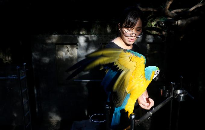 Trong quán có những con vẹt có giá trị lên đến hàng nghìn USD. Đắt nhất là giống vẹt Harlequin Macaw có nguồn gốc Nam Mỹ, với giá khoảng 5.000 USD.