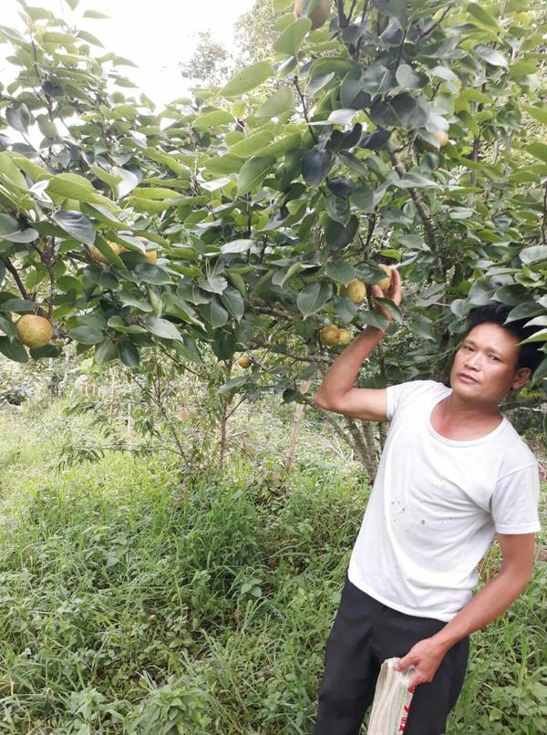 Ông Tẩn Lào Lù bên vườn lê Tai Nung.