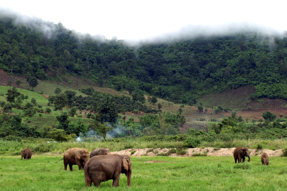 Chiêm ngưỡng động vật hoang dã: Các khu bảo tồn voi nằm rải rác khắp Thái Lan, trong đó công viên voi ở Chiang Mai là một trong những nơi nổi tiếng nhất. Đây là nơi giải cứu và chăm sóc voi. Du khách được chào đón tới xem chúng tắm trên sông và tiếp xúc với loài vật tuyệt vời này. Ảnh: Suma Lifestyle.