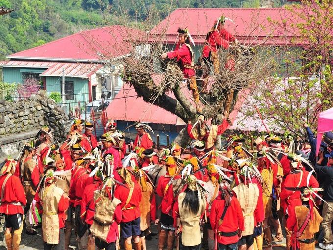 Người Tsou tôn thờ những vị thần hiện diện trong mọi khía cạnh cuộc sống của bộ tộc này. Họ có nhiều lễ hội song ba ngày Mayasvi, Miyapo và Homeyaya là quan trọng nhất. Tất cả được tổ chức tại kuba, một nhà mái tranh có vai trò như không gian văn hóa tâm linh của cả làng. Ảnh: Weibo.