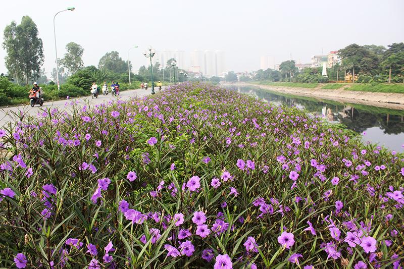 Sau khi trồng, con đường hoa được đoàn thanh niên xã Thanh Liệt giao cho đoàn thanh niên thôn Tràng và người dân sống quanh khu vực quản lý, chăm sóc.