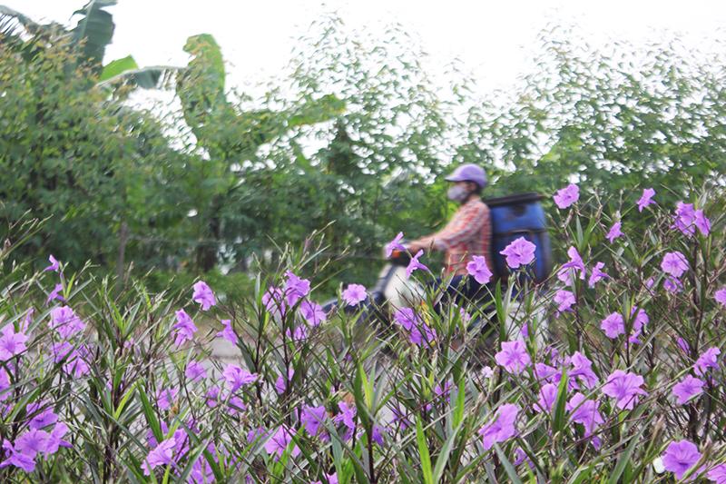Theo bà Ba, từ khi ven bờ sông được trồng hoa, người dân sống quanh khu vực đã ý thức hơn trong việc bảo vệ môi trường.