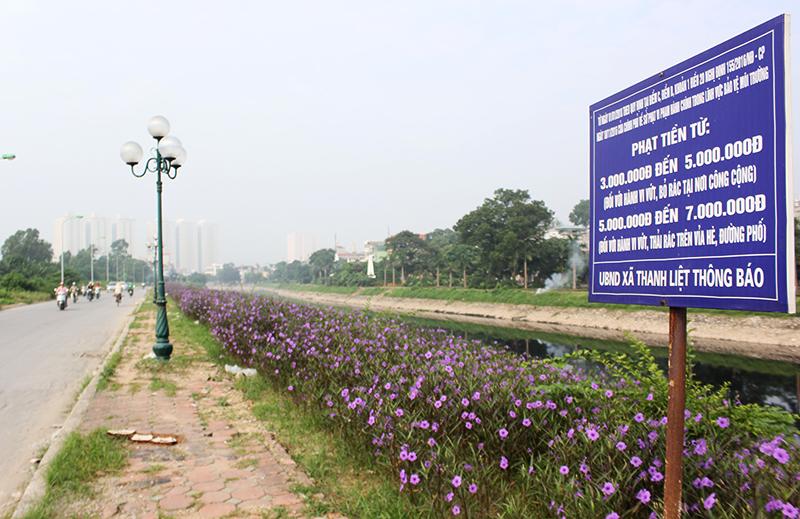 Đặc biệt, loài hoa chiều tím nở quanh năm và phát triển rất mạnh, thường được trồng để làm đẹp cảnh quan quanh nhà và đô thị.