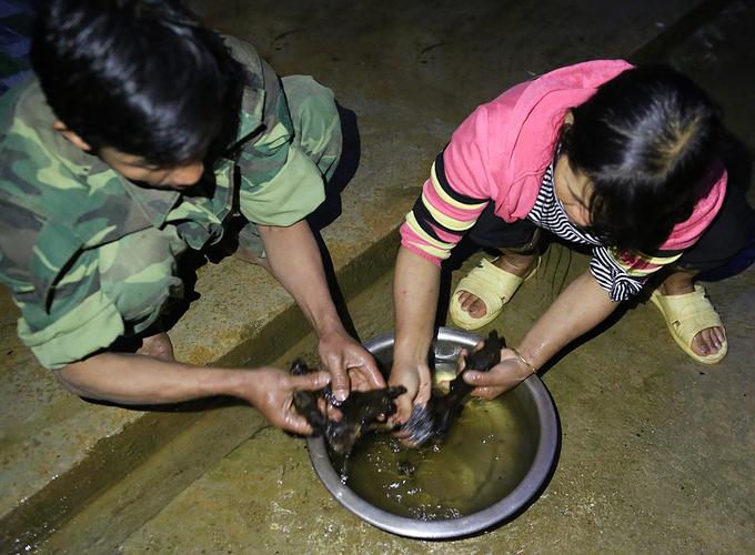Mỗi buổi sáng đi săn về, người dân sẽ làm sạch chuột và treo chúng lên gác bếp cho tới khi khô quắt để tránh bị thối.