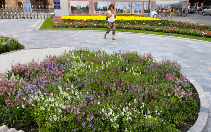 Hoa được trồng thành luống trong các ô đất trước đây chỉ trồng cỏ.