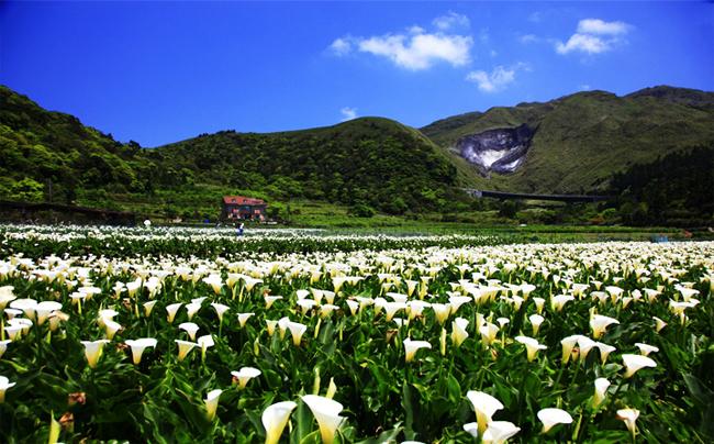 Một góc công viên Dương Minh Sơn mùa xuân.