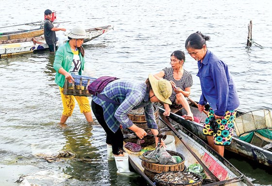 Tư thương phân loại cá tôm trước khi đưa đi phân phối tại các chợ ở TP Huế.
