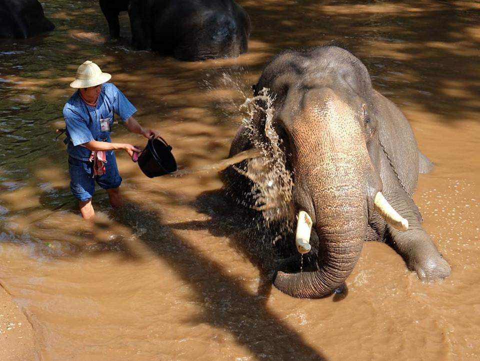 Cách thành phố Chiang Mai khoảng 30 km, trại voi Mae Sa tọa lạc giữa những tán cây rừng tươi tốt, nằm trọn trong thung lũng đẹp như tranh vẽ khi có sông và núi bao quanh. Đây là nhà của hơn 70 chú voi đã được thuần hóa. Hàng ngày, người ta đưa voi đi tắm mát dưới dòng sông, cho voi ăn và cho chúng luyện tập và chơi đùa. Ảnh: @porplevietnamese