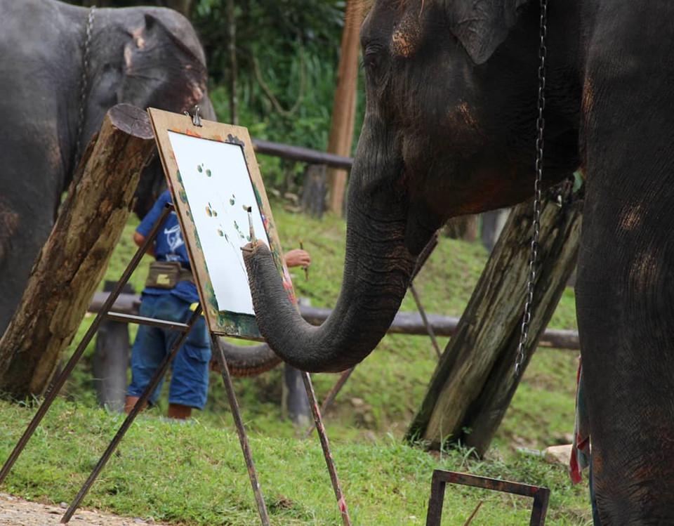Voi ở trại biết chơi đá bóng và vẽ tranh khiến du khách vô cùng thích thú. Tới đây, bạn có thể cưỡi voi đi vòng quanh trại và tận hưởng những khung cảnh thiên nhiên yên bình, hoang sơ. Bên cạnh đó, nếu có nhu cầu, bạn có thể học cách điều khiển các chú voi to lớn. Ảnh: @muly_bwatchar