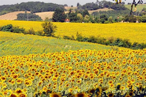 Ngoài các khu thành thị, bạn có thể khám phá những vùng nông thôn ở châu Âu, cảnh đẹp và an toàn hơn. Ảnh: Anh Ngọc.
