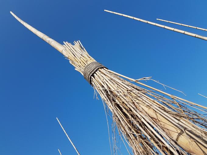Du khách được khuyến cáo không nên trèo lên thân cây chổi tre nhưng có thể bám vào để tạo dáng, chụp hình thoải mái.