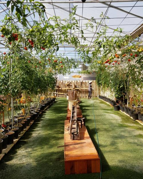 """Tọa lạc tại địa chỉ số 42 đường Xô Viết Nghệ Tĩnh, Đà Lạt và nằm bên cạnh công ty Langbiang Farm, quán nhỏ được thiết kế giống một nhà kính với diện tích trồng nhiều loại cây như hồng, cà chua bi, dâu tây, các loại rau. Bạn có thể tận hưởng ánh nắng tự nhiên dịu nhẹ và sản xuất nhiều kiểu ảnh sống ảo tại """"studio"""" thu nhỏ này. Chủ quán cho đặt nhiều tiểu cảnh tạo điều kiện cho thực khách """"tác nghiệp"""" như xích đu, ghế gỗ, gàu múc nước, gánh hoa..."""
