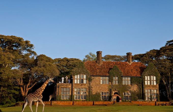 Đó chính là những chú hươu cao cổ Rothschild sống trong khu bảo tồn. Khi Betty mua lại căn nhà này, cô đã biến nó thành ngôi nhà thứ 2 của 3 chú hươu cao cổ có tên Tom, Dick và Harry. Đến nay, số lượng hươu cao cổ sống trong khuôn viên khách sạn đã tăng lên tầm hơn 10 con, trở thành những người bạn thân thiện của khách lưu trú.