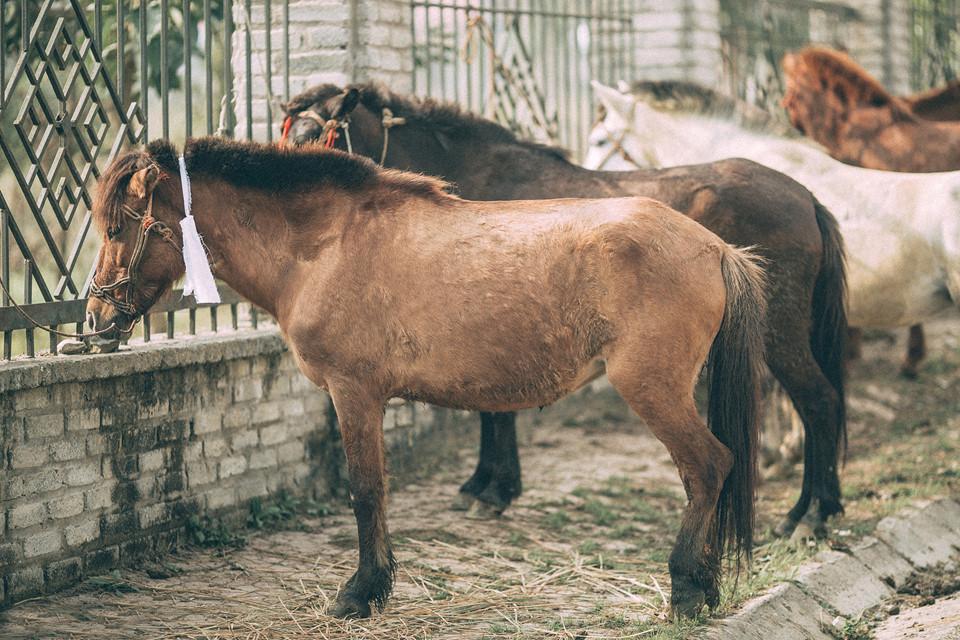 Mỗi gian hàng ở chợ phiên có một điểm thú vị riêng. Rất nhiều các mặt hàng truyền thống từ động vật tới đồ vật được bày bán. Trong những lần tới chợ phiên Bắc Hà, tôi đặc biệt ấn tượng với chợ ngựa. Những con ngựa được bày bán như một phương tiện vận chuyển, đi lại của những dân tộc thiểu số vùng cao.