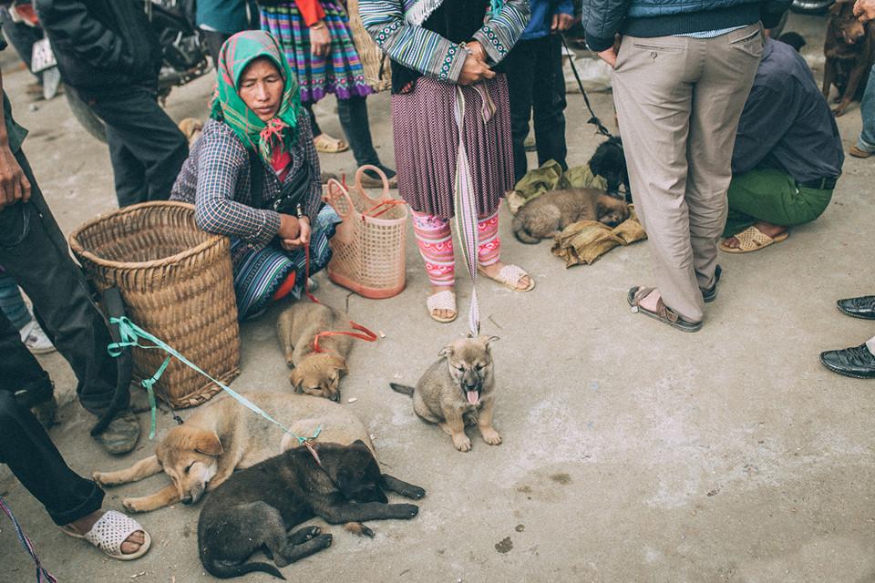 Chợ khuyển là một trong những địa điểm tấp nập nhất chợ phiên Bắc Hà. Những chú chó miền núi nhiều màu sắc, tinh nghịch nằm chờ chủ mới đón.
