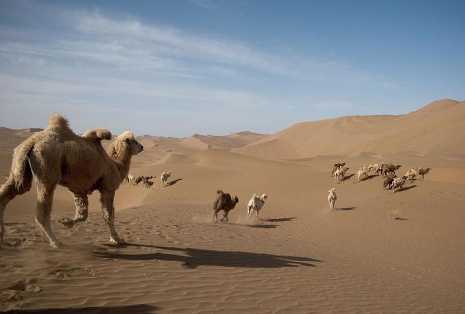 Sa mạc Gobi từng là một phần của đế quốc Mông Cổ, nơi con đường tơ lụa đi qua. Ảnh: Nicolas Asfouri/AFP.