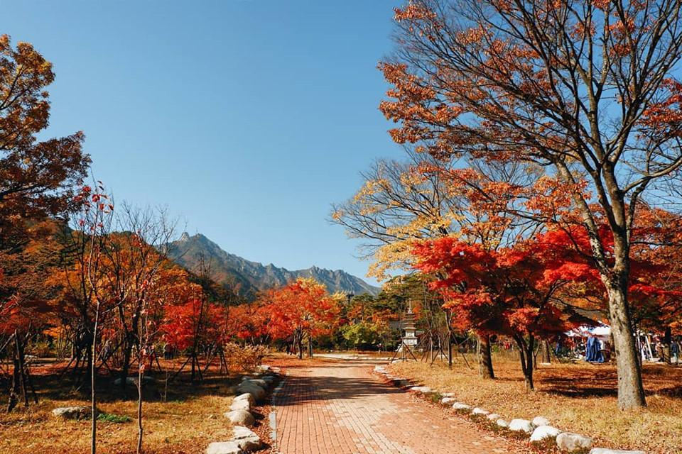 Ở Hàn Quốc, mùa thu thường rơi vào khoảng tháng 9 đến tháng 11. Với tiết trời khô hanh, mát mẻ, đây là thời điểm đẹp nhất để bạn ghé thăm xứ sở kim chi. Những người mê du lịch hẳn không xa lạ với hình ảnh những hàng cây lá vàng, lá đỏ rực rỡ trong các thước phim Hàn Quốc. Đến khám phá xứ Hàn mùa này, bạn đừng quên tìm kiếm địa điểm ngắm lá vàng mùa thu. Ảnh: @photographvkp.