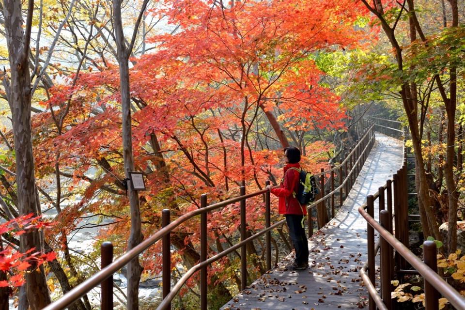 Công viên Quốc gia Jirisan: Cũng thuộc tỉnh Jeolla-do nhưng nằm ở thành phố Namwon, bạn có thể di chuyển đến công viên Quốc gia lâu đời nhất Hàn Quốc Jirisan, nơi có ngọn núi Jirisan cao thứ hai trong cả nước (1.915 m). Nổi tiếng với vẻ đẹp hoang sơ dân dã, đây là một trong những điểm ngắm lá vàng thu hút khách nhất. Ảnh: @bukak123.