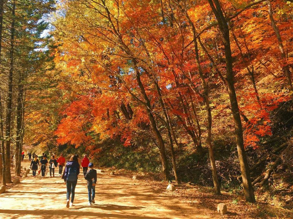 Công viên Quốc gia Odaesan: Được biết đến với rừng thông dày đặc, công viên Quốc gia Odaesan đã được sử dụng làm bối cảnh trong bộ phim truyền hình nổi tiếng Goblin do hai diễn viên chính Gong Yoo và Kim Go Eun thủ vai. Ảnh: @andybokchoi.