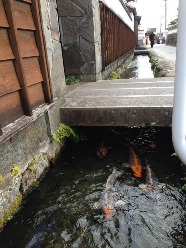 Năm 1978, Hiệp hội khu phố bắt đầu quy hoạch hệ thống đường thủy nội địa dài khoảng 100 m với nguồn nước sạch để nuôi cá koi.