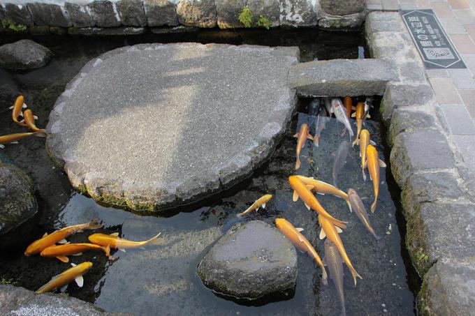 """Hiện nay, nó trở thành địa điểm du lịch nổi tiếng, được mệnh danh là """"thành phố của nước"""" hay """"thành phố của cá Koi""""."""